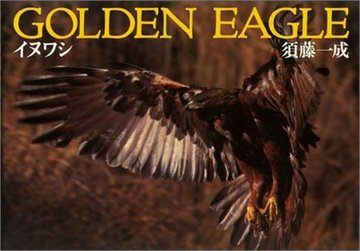 Golden Eagle―イヌワシ