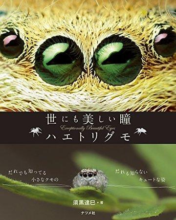 世にも美しい瞳 ハエトリグモ