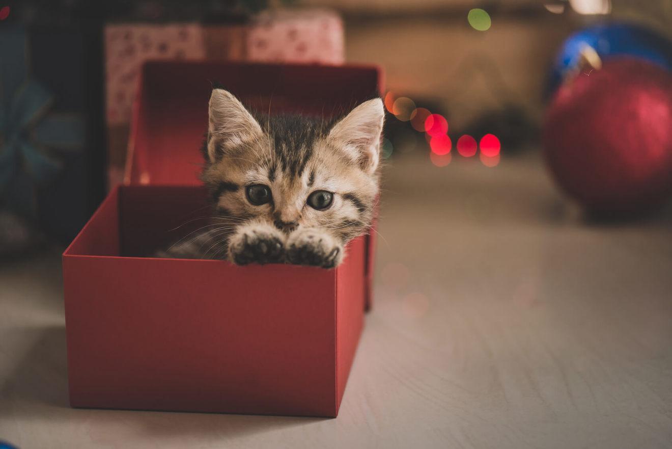 ねこ、ネコ、猫!文庫で読める面白い猫小説おすすめランキングベスト5!