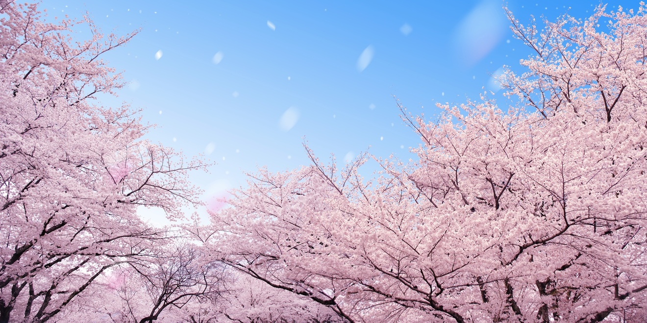 おすすめの青春小説23選!恋愛、友情、一瞬のきらめきを描いた文庫作品