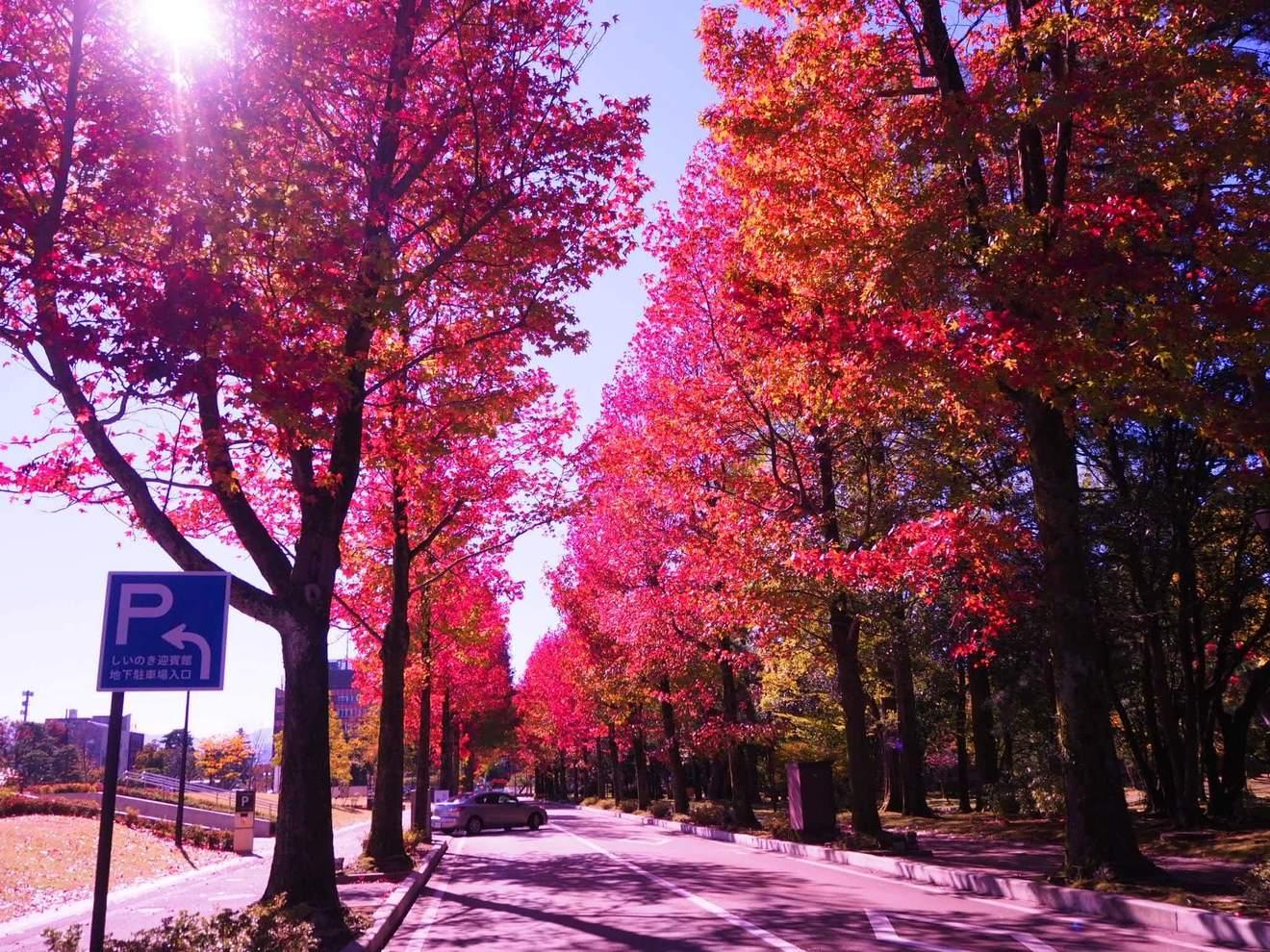 高橋三千綱のおすすめ作品5選!「九月の空」で芥川賞受賞、病と闘う作家