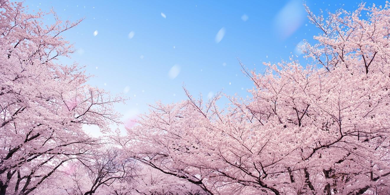小野小町の意外な事実7つ!麗しき女流歌人を知るおすすめの本も。