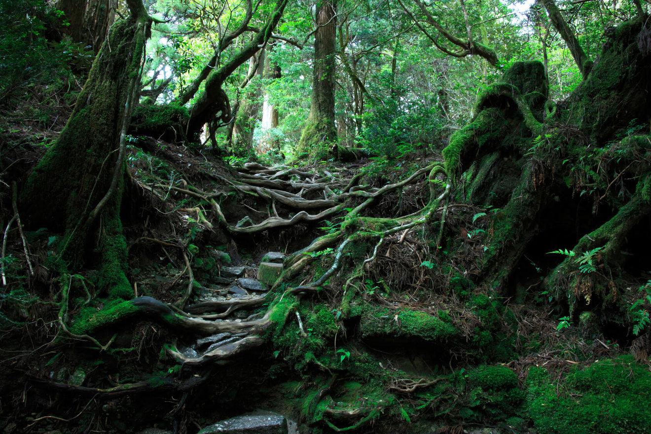 C・W・ニコルのおすすめ本5選!英国出身で日本に帰化した、森を愛する作家