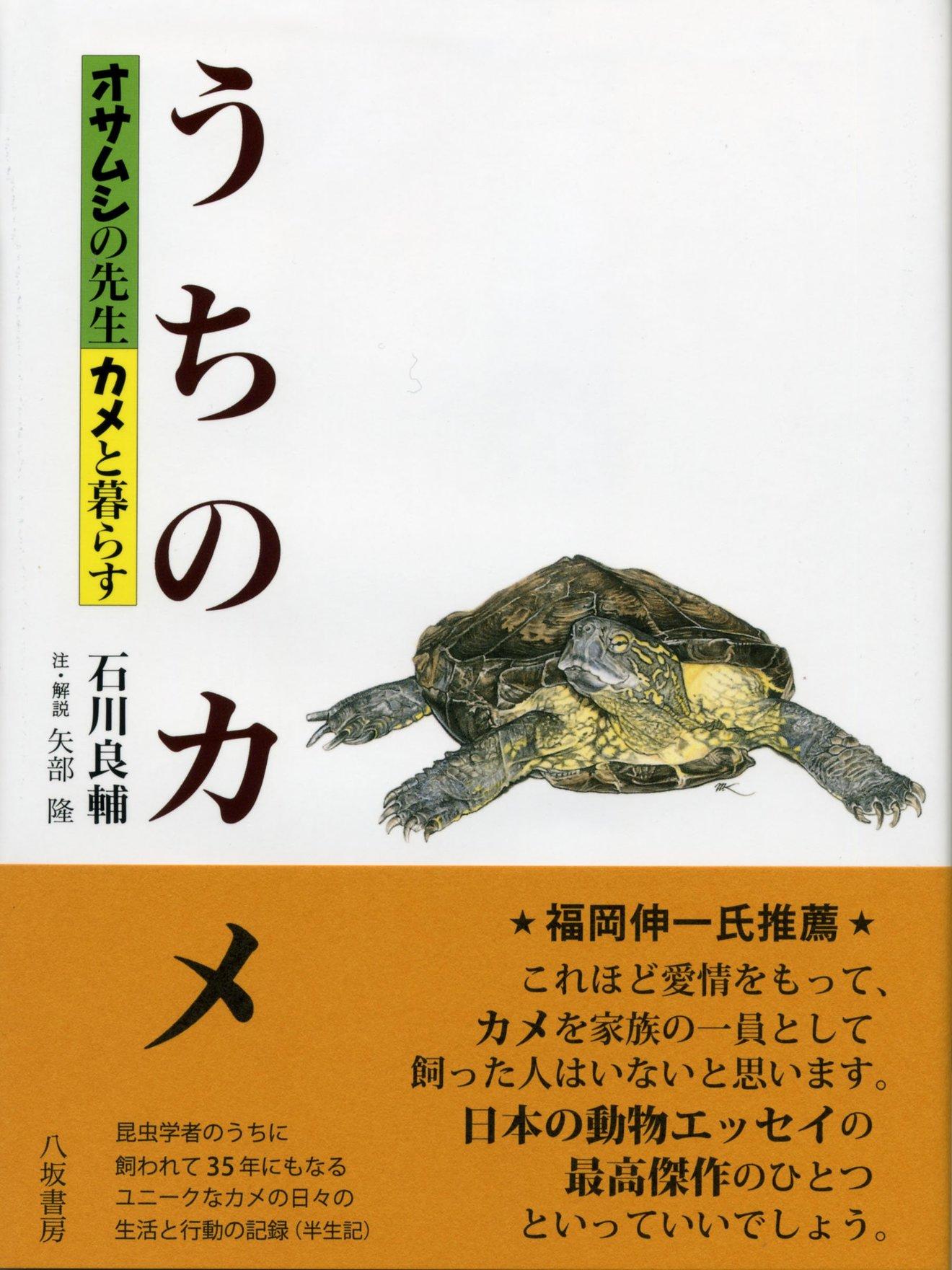 カメの飼育の基本を紹介!餌やりの仕方から、おすすめの本まで
