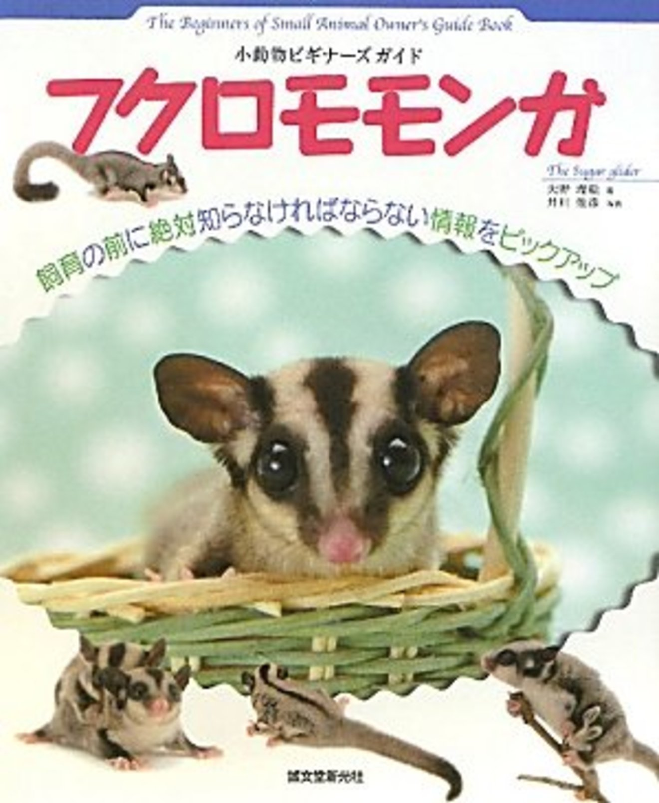 モモンガの飼育方法をご紹介!種類や生態をきちんと理解しましょう