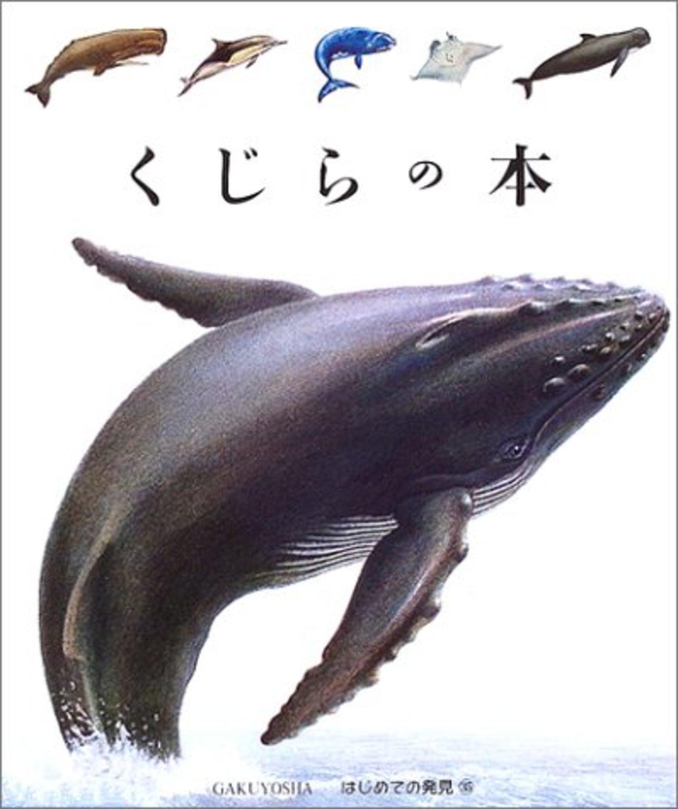 クジラの体はなぜ大きい?世界最大の哺乳類の謎に迫る3冊
