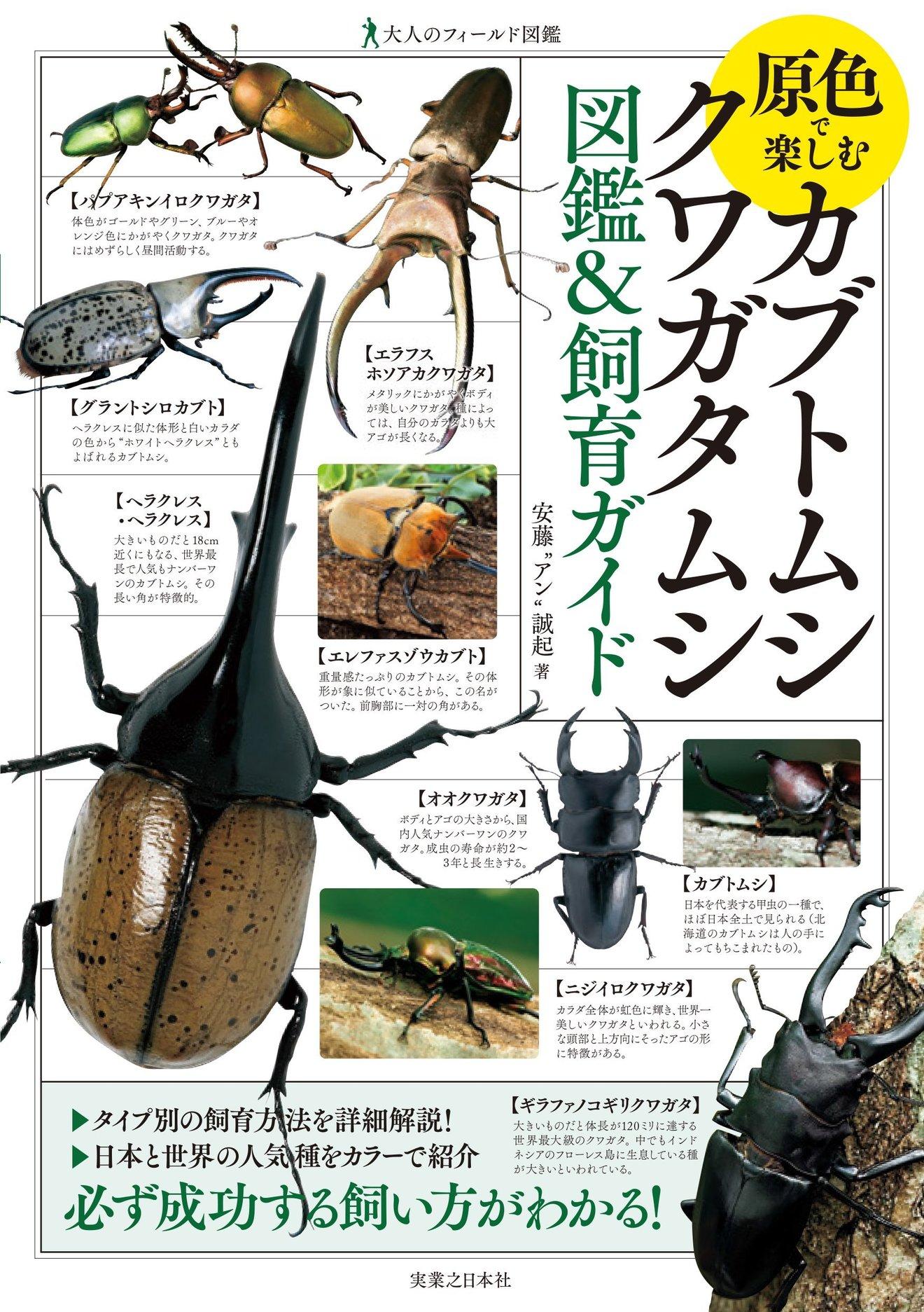 カブトムシの飼育方法を紹介!クワガタとの違いは?餌やりから種類