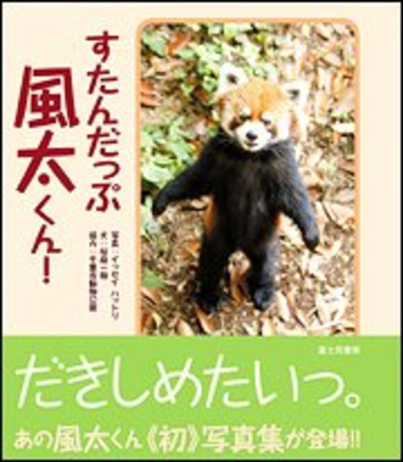 意外と知らないレッサーパンダの生態!かわいいだけじゃない性格や特徴を紹介