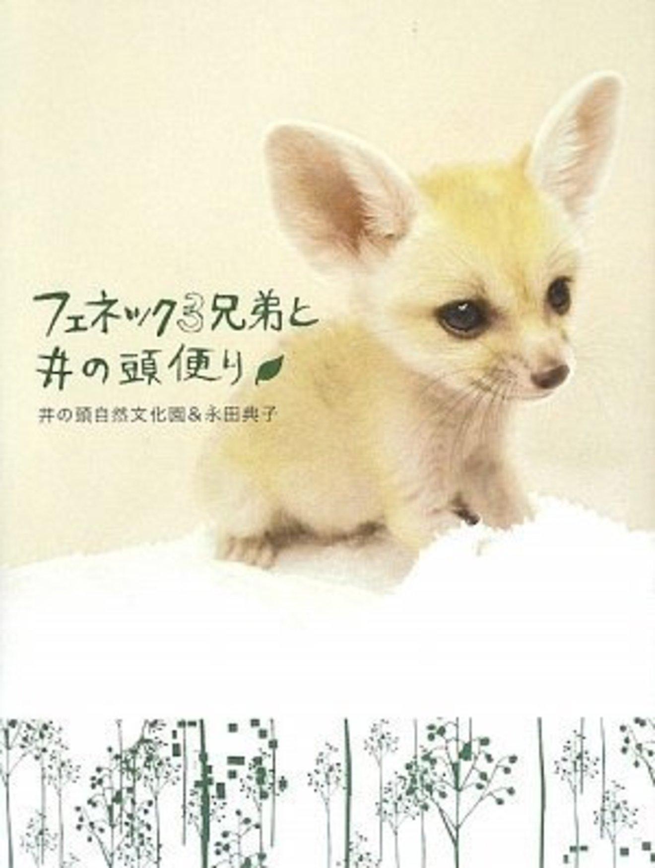 5分でわかるフェネックの生態。性格や飼育法、臭い対策などを解説!