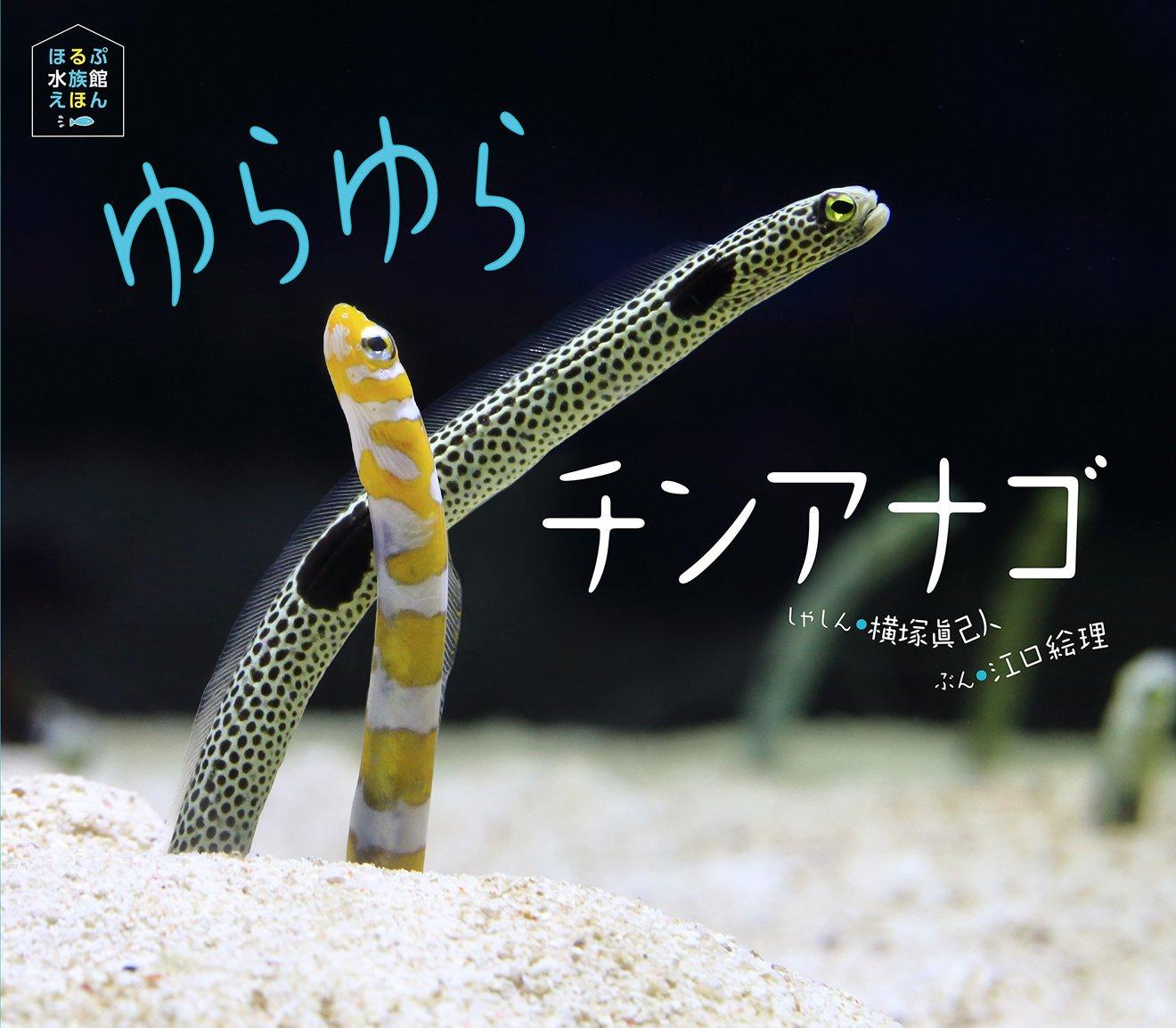 珍しすぎるチンアナゴの生態は?種類ごとの全長や、名前の由来も解説!