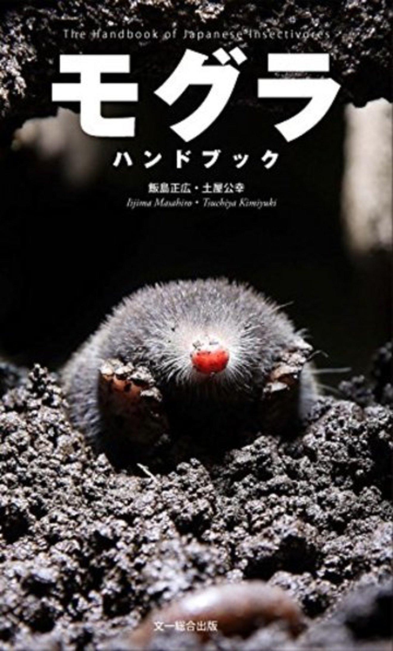5分でわかるモグラの生態!なぜ穴を掘る?飼育はできる?実は大食い!