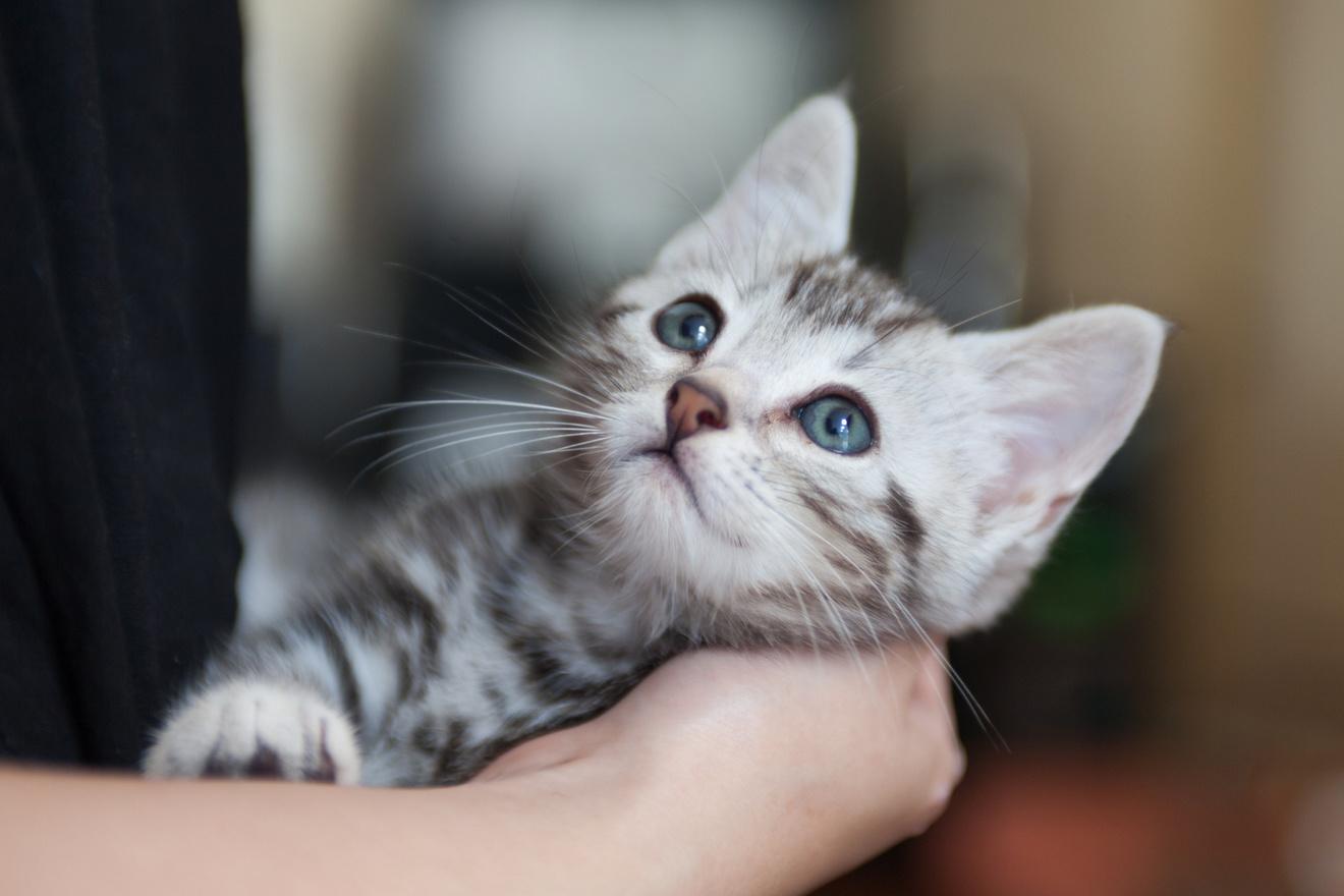 5分で分かる『吾輩は猫である』!登場人物、あらすじ、結末から名作を解説!