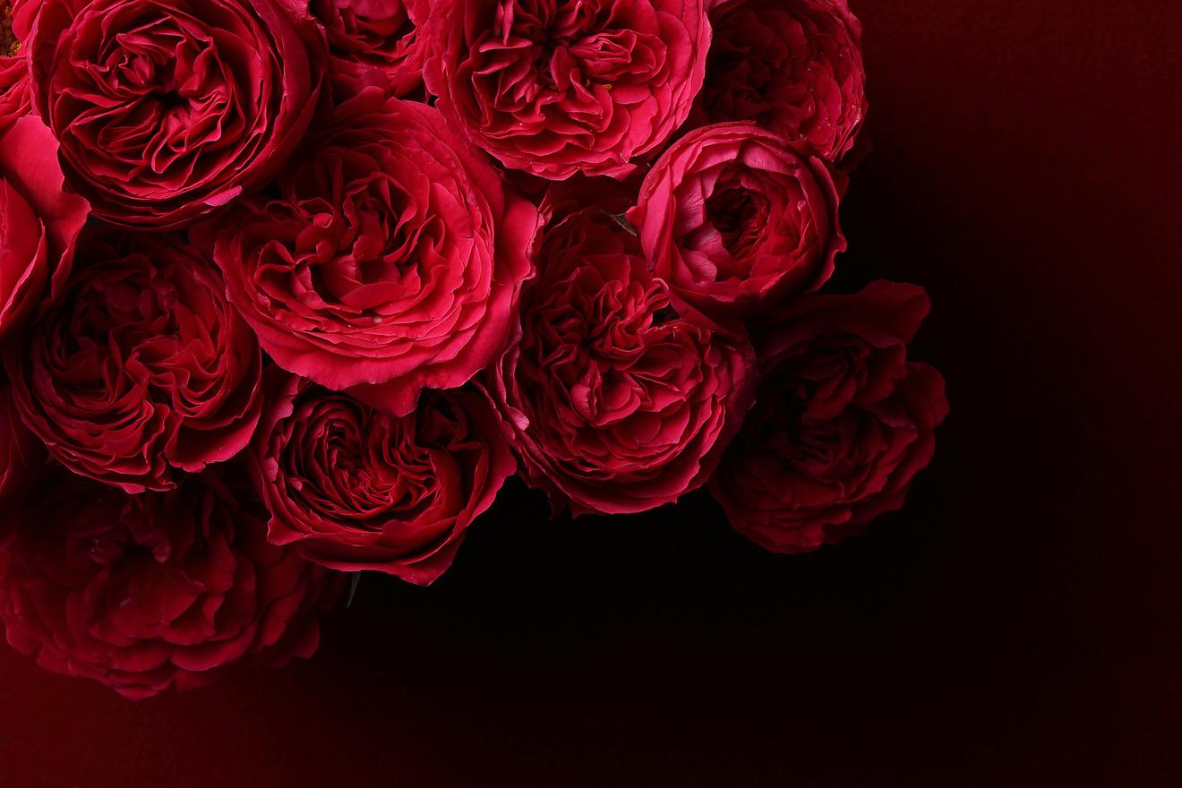 小説『チャタレイ夫人の恋人』をネタバレ考察!あらすじ、結末などまで解説