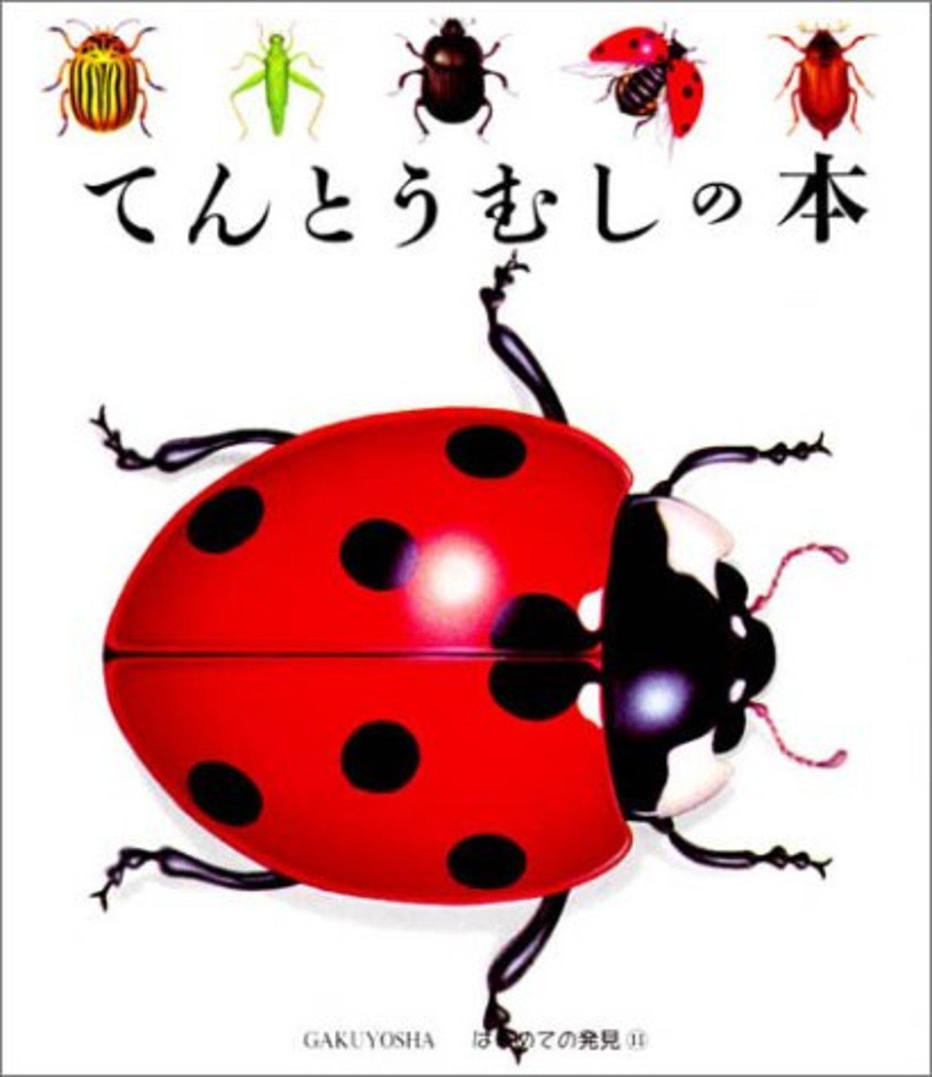 5分でわかるてんとう虫の生態!種類ごとの特徴や、幸運を呼ぶジンクスなど