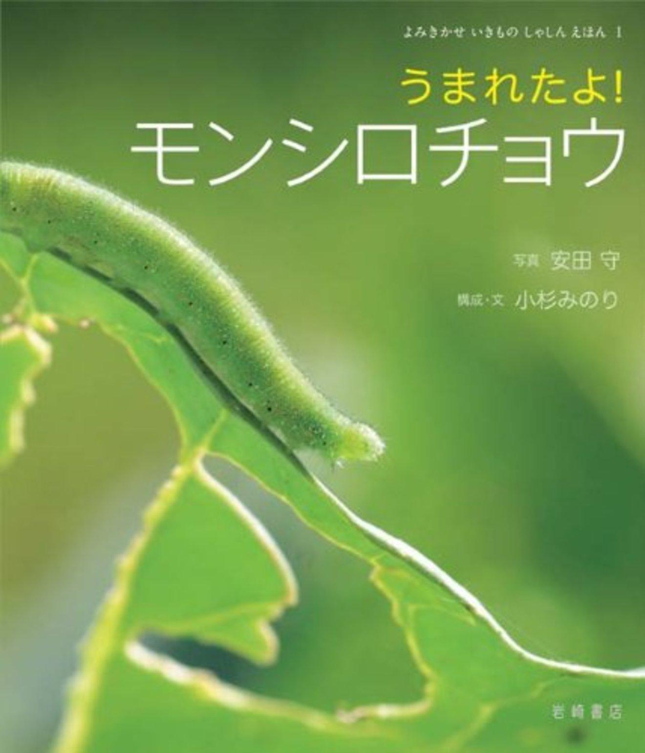 5分でわかるモンシロチョウの生態!卵~幼虫~さなぎ~成虫と一生を解説!