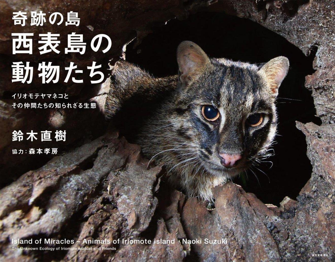 5分でわかるイリオモテヤマネコの生態と特徴!保護活動についても解説!