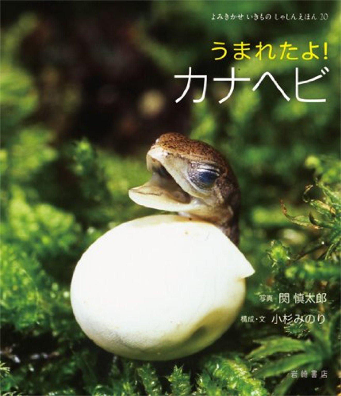 5分でわかるカナヘビの生態!種類や飼い方、卵、トカゲとの違いなどを解説