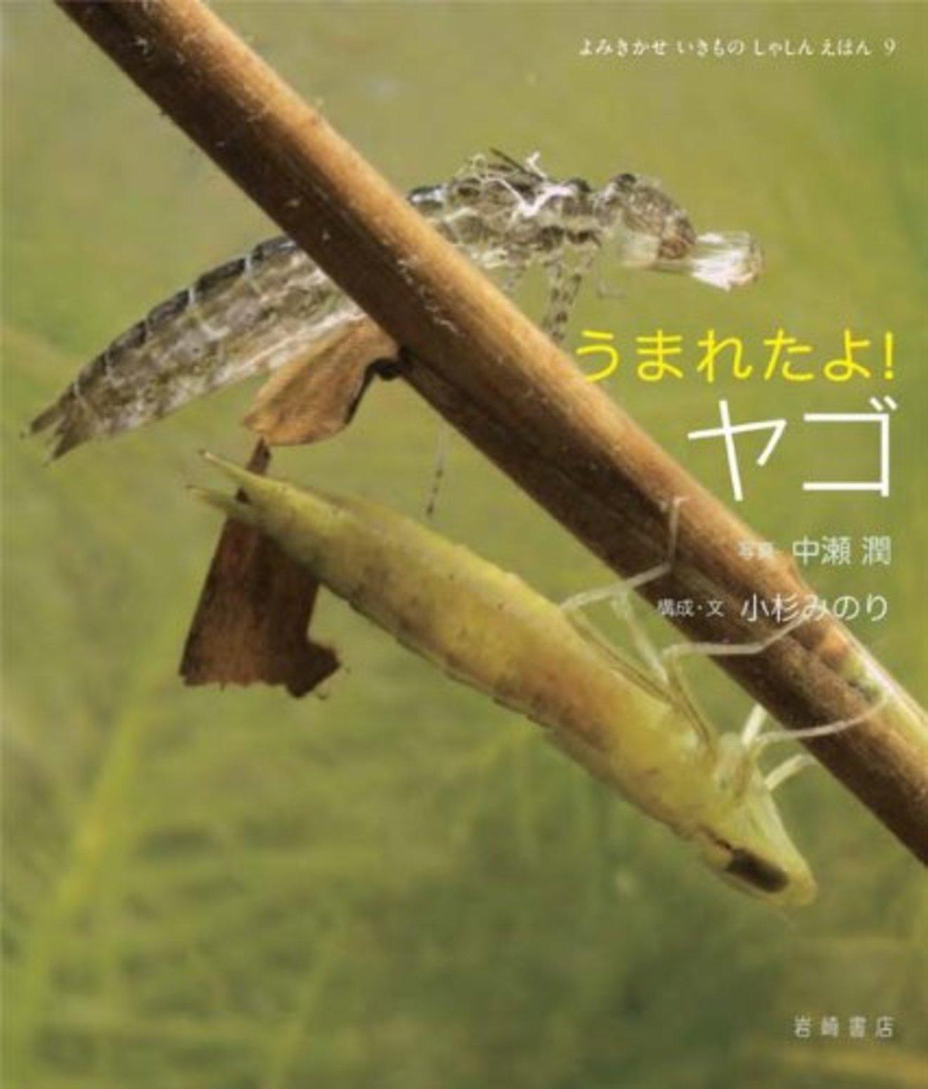 5分でわかるヤゴの生態!種類ごとの特徴、成長過程、飼育方法などを解説