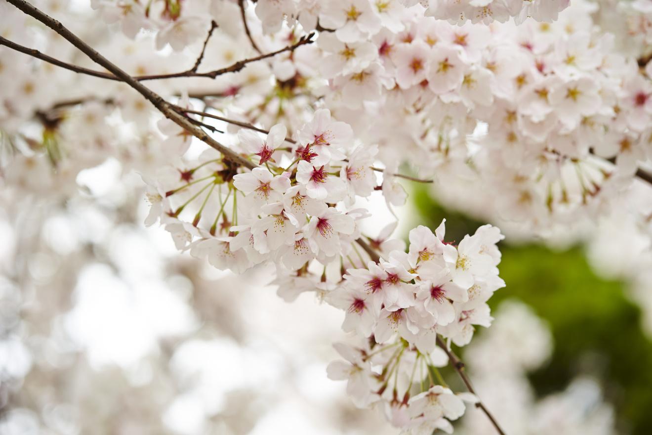 『春と修羅』有名な6つの詩を現代語訳の意味を含めて解説!宮沢賢治の世界