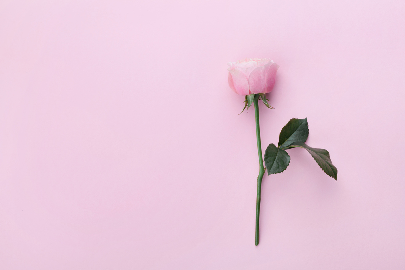 『愛がなんだ』を5分でネタバレ解説!角田光代の自分系 恋愛小説が面白い