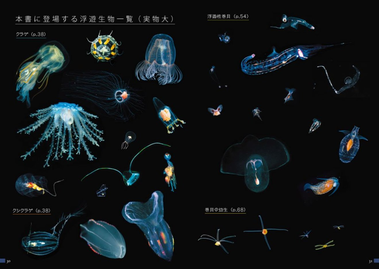5分でわかるプランクトン!定義や植物性・動物性の違い、赤潮なども解説