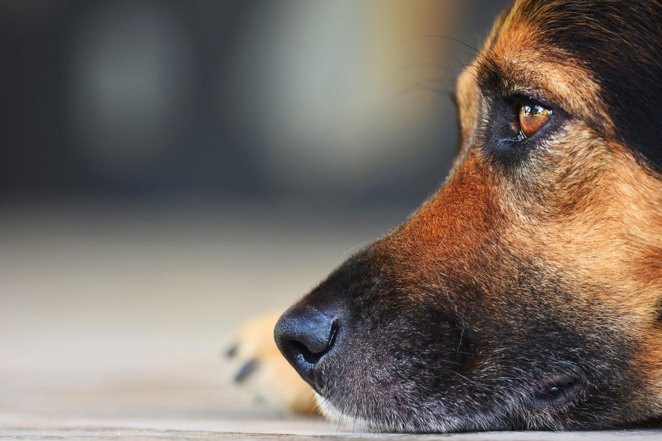 犬が活躍する小説おすすめ6選!推理系や感動系など、日本と海外の作品を紹介