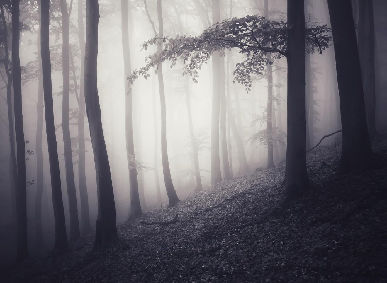死がテーマの小説おすすめ5選!考えさせられる作品たち