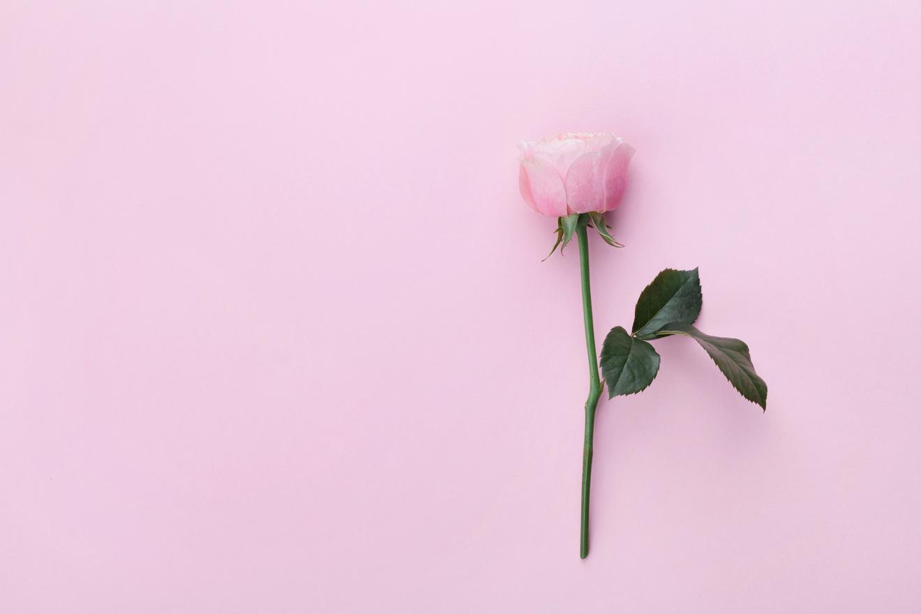 失恋した時に読んでほしい!おくすりのような恋愛小説おすすめ5選!