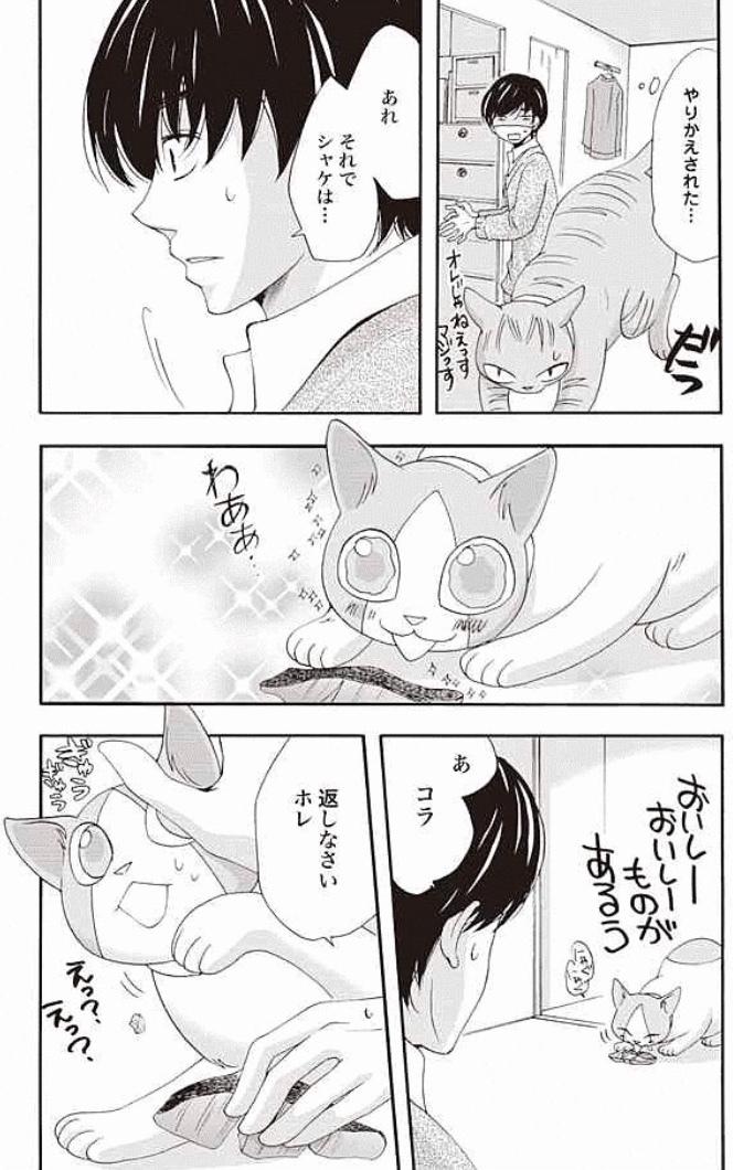 猫たちそれぞれのキャラが可愛くて癒される!